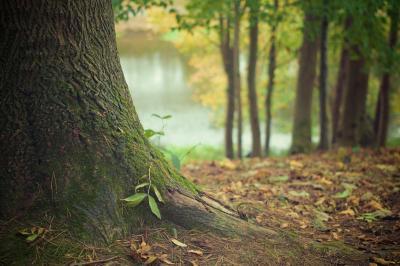 Waldwoche in Sontra