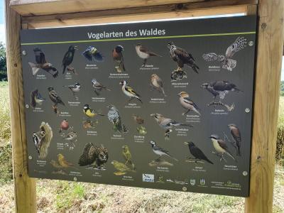 Mehr als nur gelungen: Wunderschön – eine der Infotafeln auf dem Vogel-Lehrpfad.