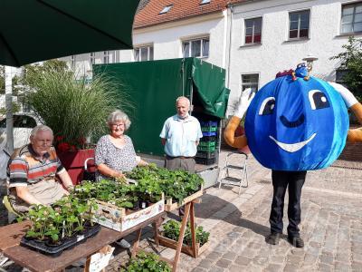 Besonders viele Erdbeerpflanzen hatte Ulrich Lemke aus Pritzwalk zum PriMa-Treff im Juni mitgebracht. Da staunte auch die dicke Heidelbeere. Foto: Sarah Schütte