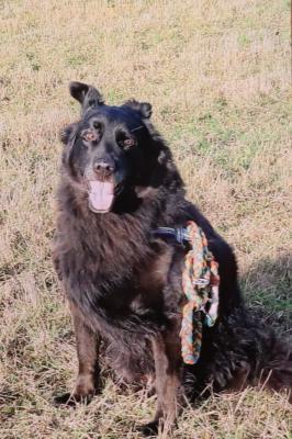 Foto zur Meldung: Hund Arco