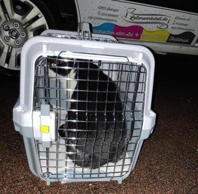 Damsdorfer*innen helfen Tieren in Not