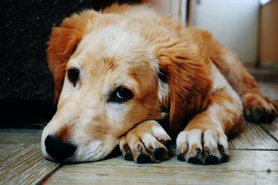 Mit entsprechenden Nachweisen lässt sich der neue Steuersatz für Hunde in Pritzwalk senken. Foto: Pixabay