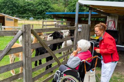 Ausflug der Tagespflege zum Alpakahof in Breese