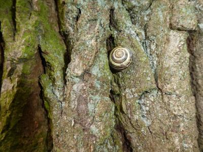 Schnecke am Baum
