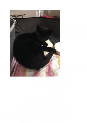 Wer vermisst kleine schwarze Katze