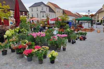 Foto zur Meldung: Entdecken und erleben Brandenburger Vielfalt auf dem Heimatmarkt 2021