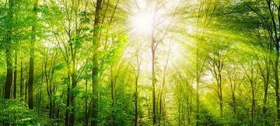 Eckpunkte des BMU für ein Umsteuern in der deutschen Waldpolitik und Honorierung der Leistungen für den Erhalt artenreicher und naturnaher Ökosysteme