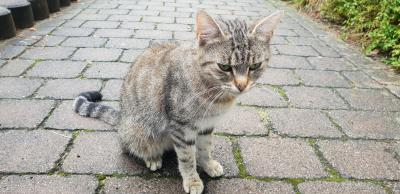 Foto zur Meldung: Katze zugelaufen