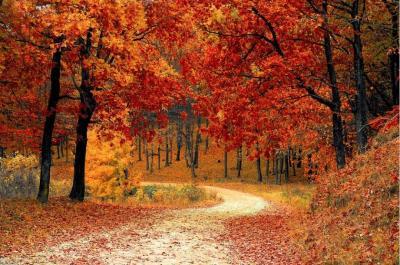 Herbstlandschaft Quelle: https://pixabay.com/de/photos/stra%c3%9fe-wald-herbst-weg-pfad-b%c3%a4ume-1072821/