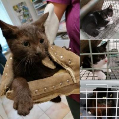 Foto zur Meldung: Katzenfamilie sucht dringend neues Zuhause