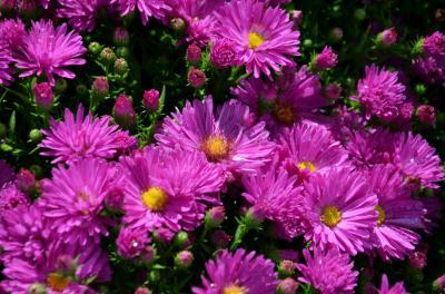 Vorschaubild der Meldung: Neue Pflanzenliste Pflanzen II