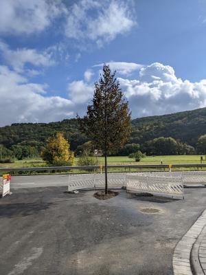 Neuer Lindenbaum