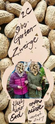 Die Gartenzwerge ernten Erdnüsse!