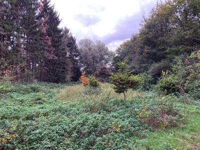 Foto zu Meldung: Hemdingen forstet auf