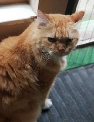 Foto zur Meldung: Katze vermisst
