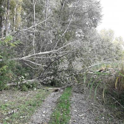 Vorschaubild der Meldung: Radweg nach Eschelbronn gesperrt