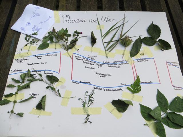 Plakat zu Pflanzen am Ufer
