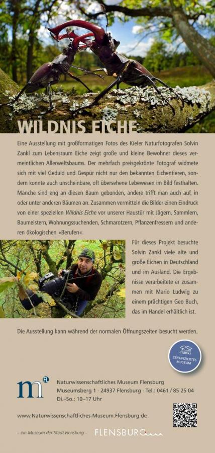 wildniseiche
