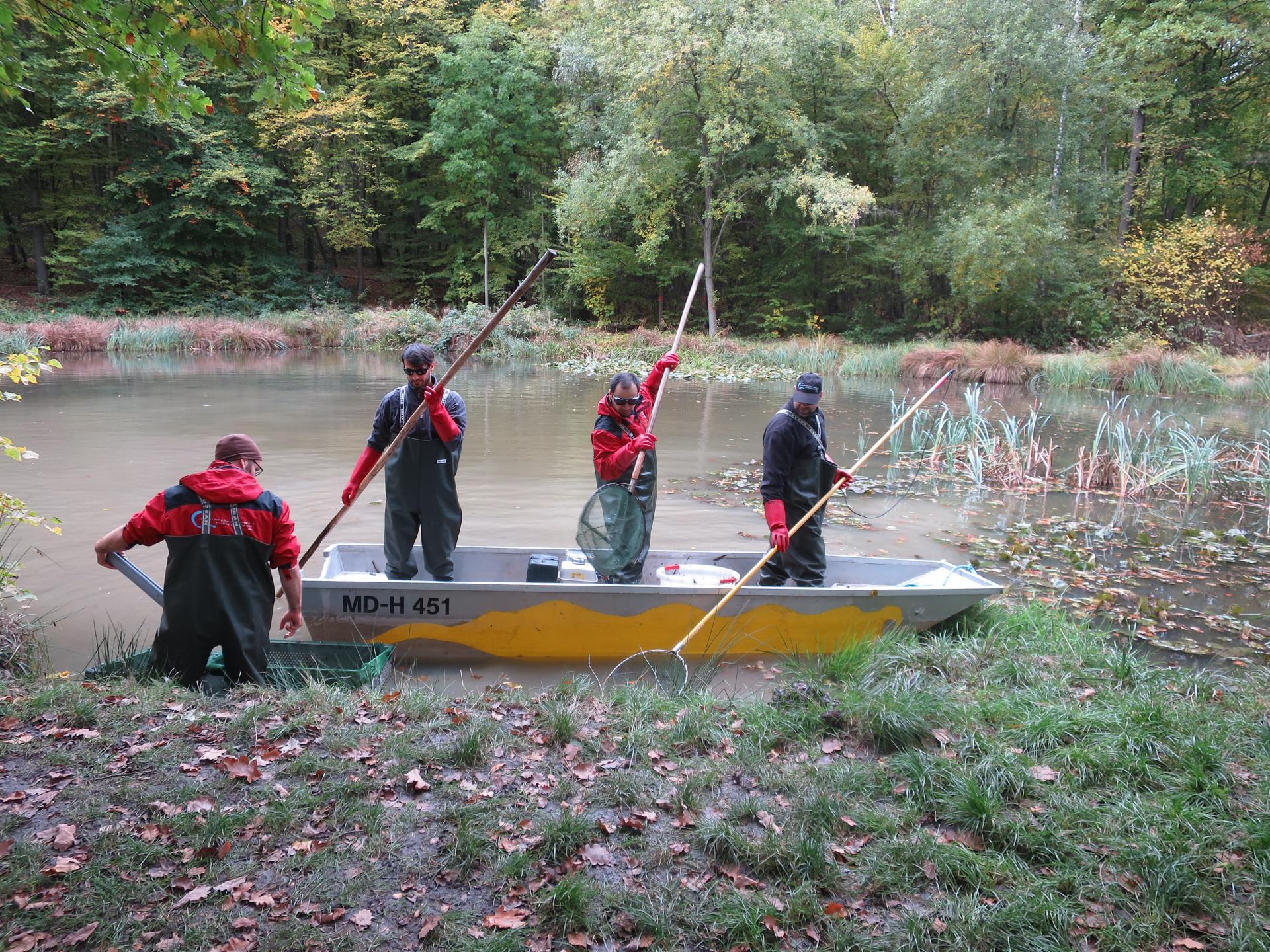 Elektro-Befischung an einem Kleingewässer bei Ettersburg