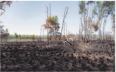 Verbrannter Waldboden