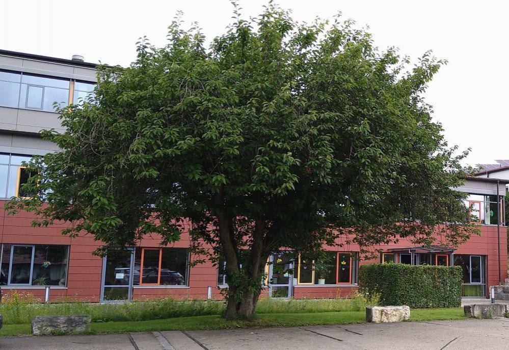 Baum Schule