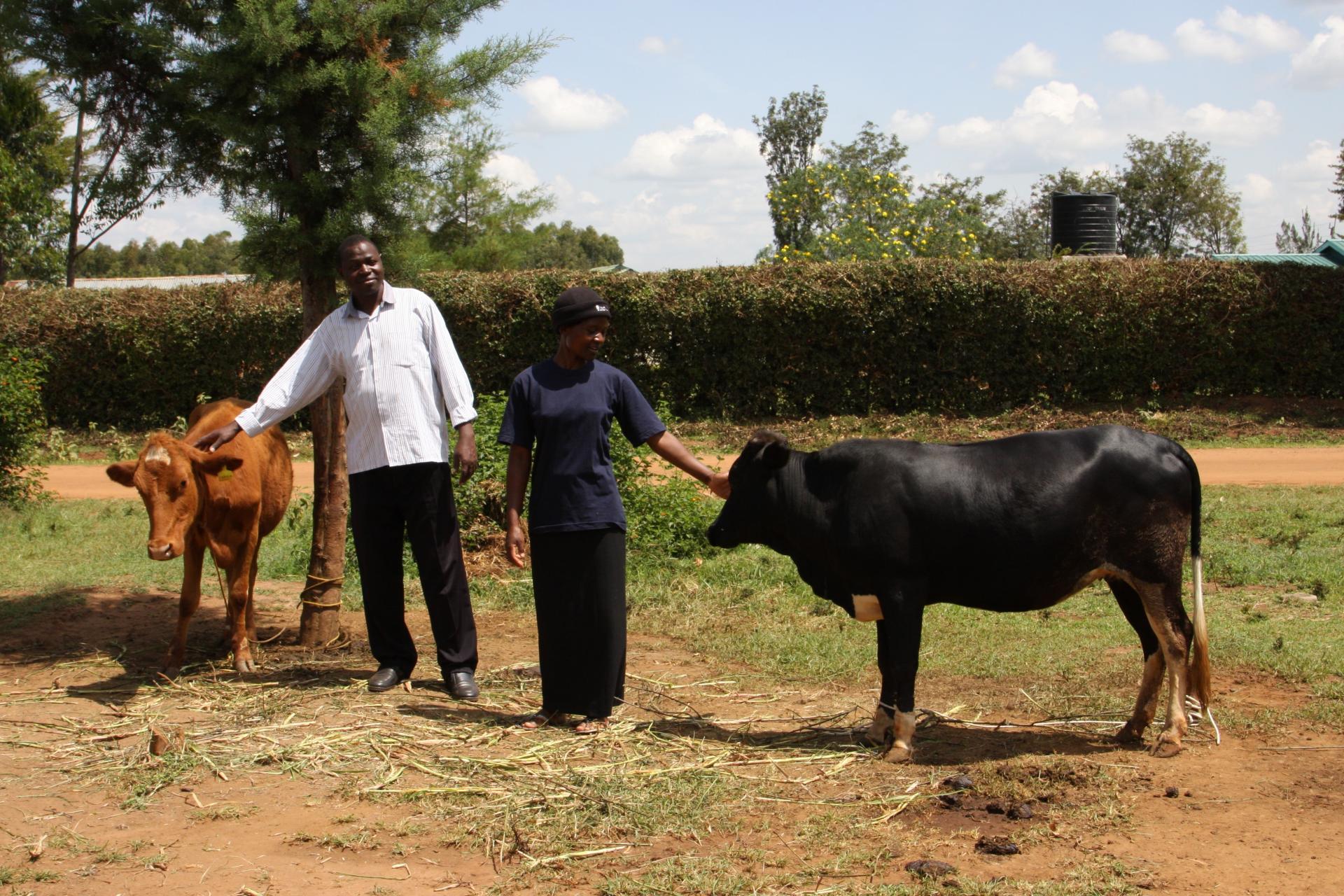 Everlyne und Kühe