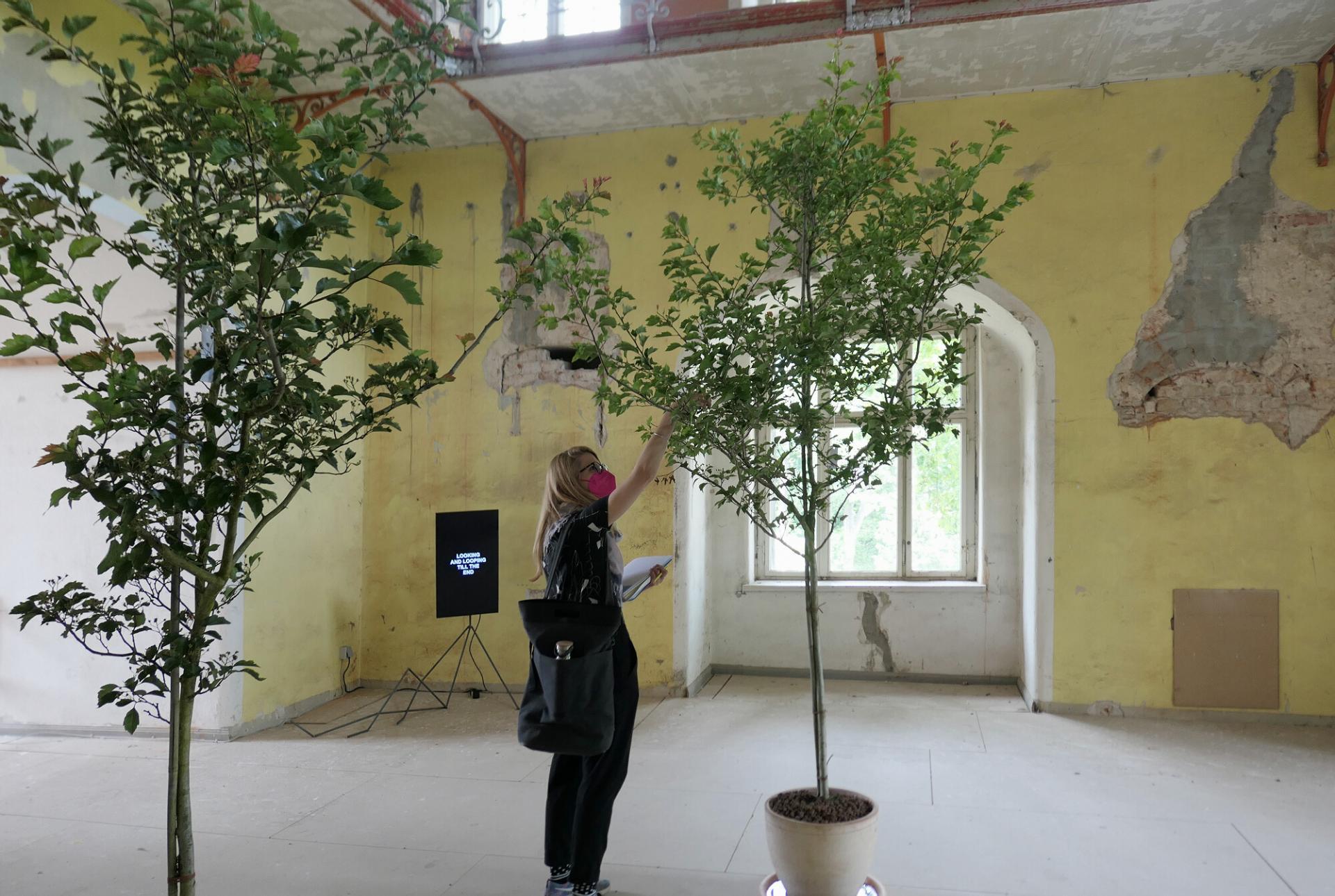 """""""Wish Tree"""": Seit 1996 lädt Yoko Ono Menschen aus der ganzen Welt ein, ihre persönlichen Wünsche aufzuschreiben und an einen Baum zu binden - wie hier in der ehemaligen Bibliothek. Die Schlossgärtnerei kümmert sich um die Pflege der Bäume. Foto: Ingrid Hoberg"""