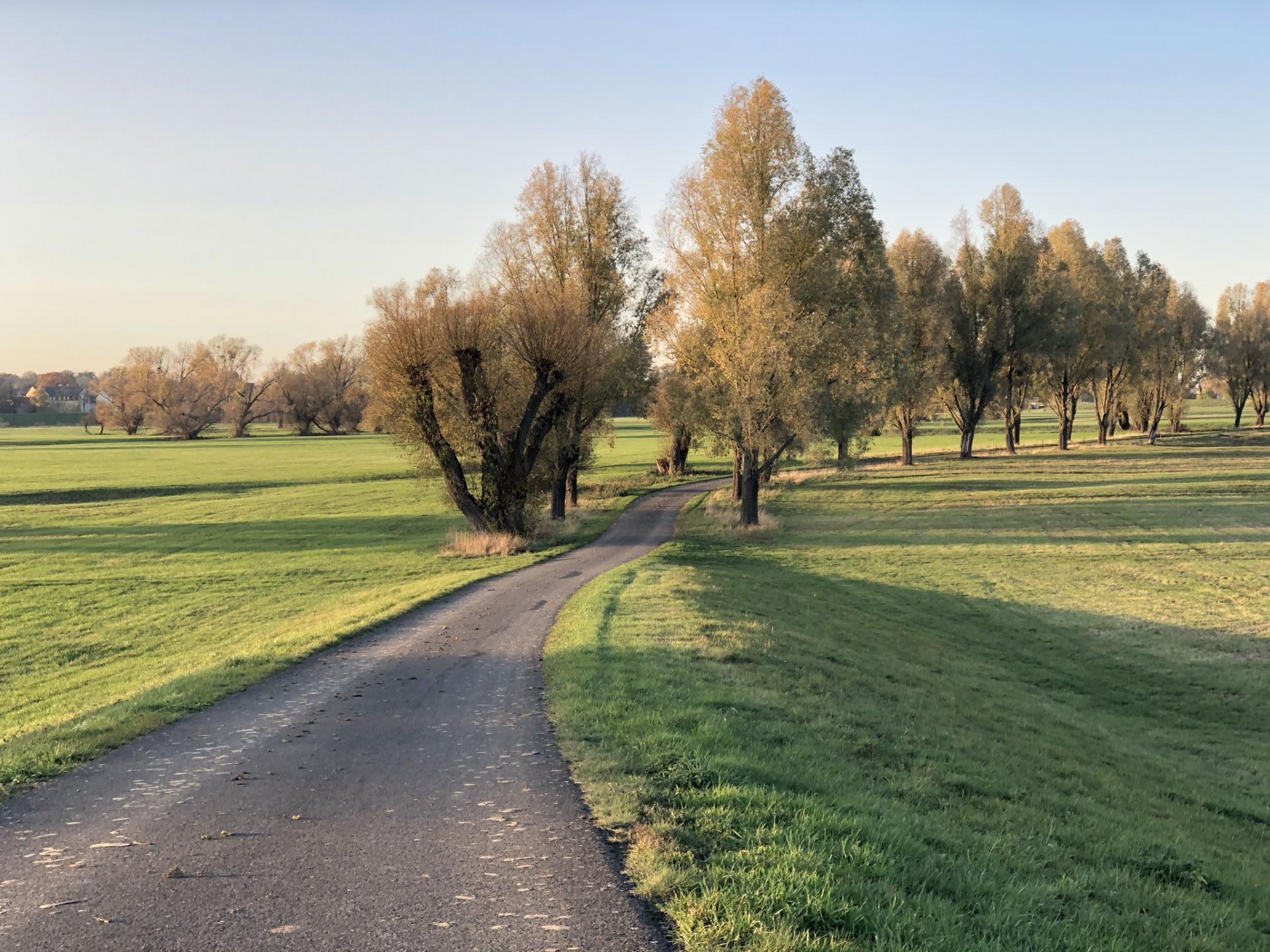 Auf dem Elberadweg von Priesitz Richtung Pretzsch  (Foto A. Montenbruck)