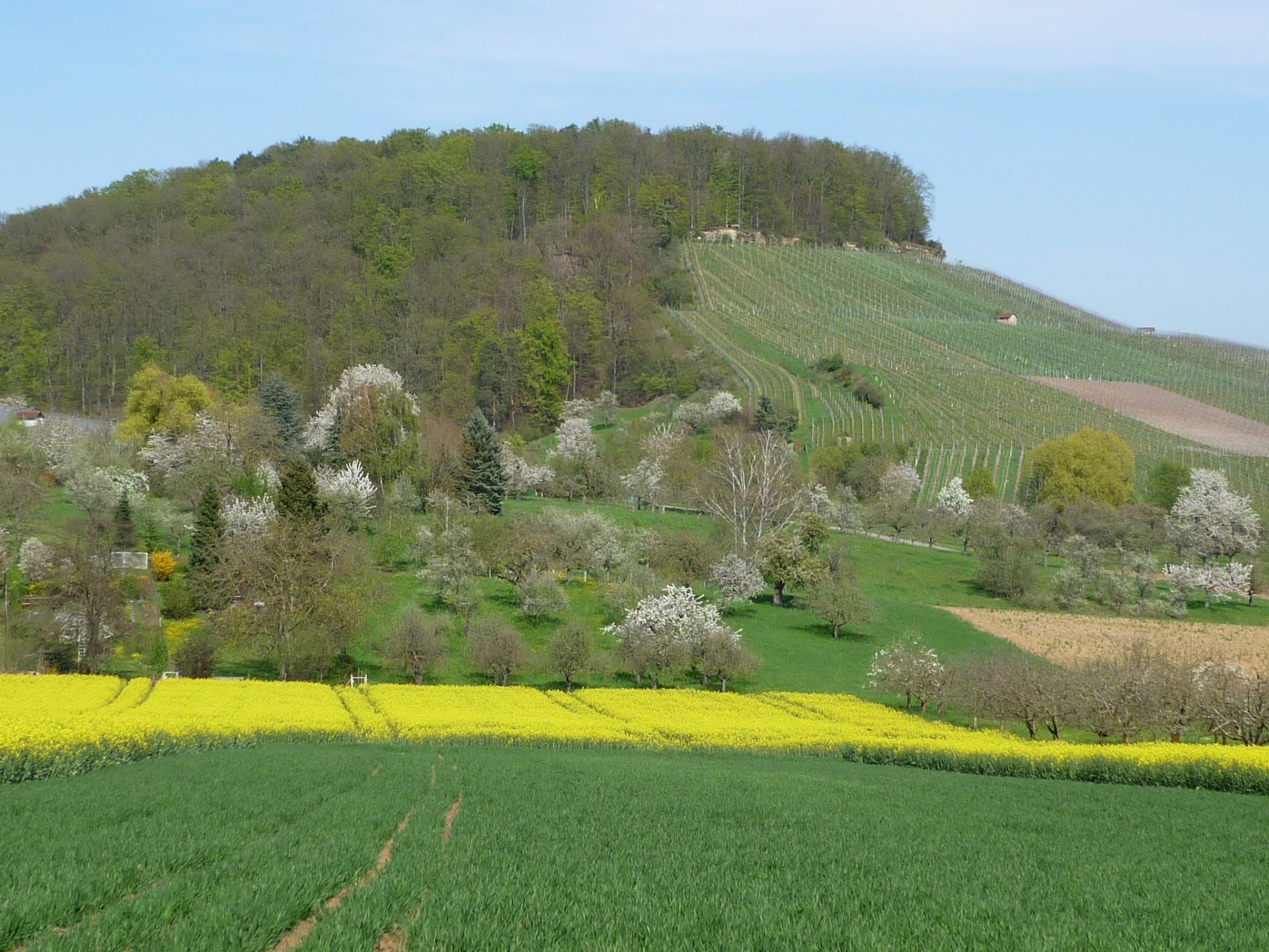 Streuobstlandschaft Köchersberg