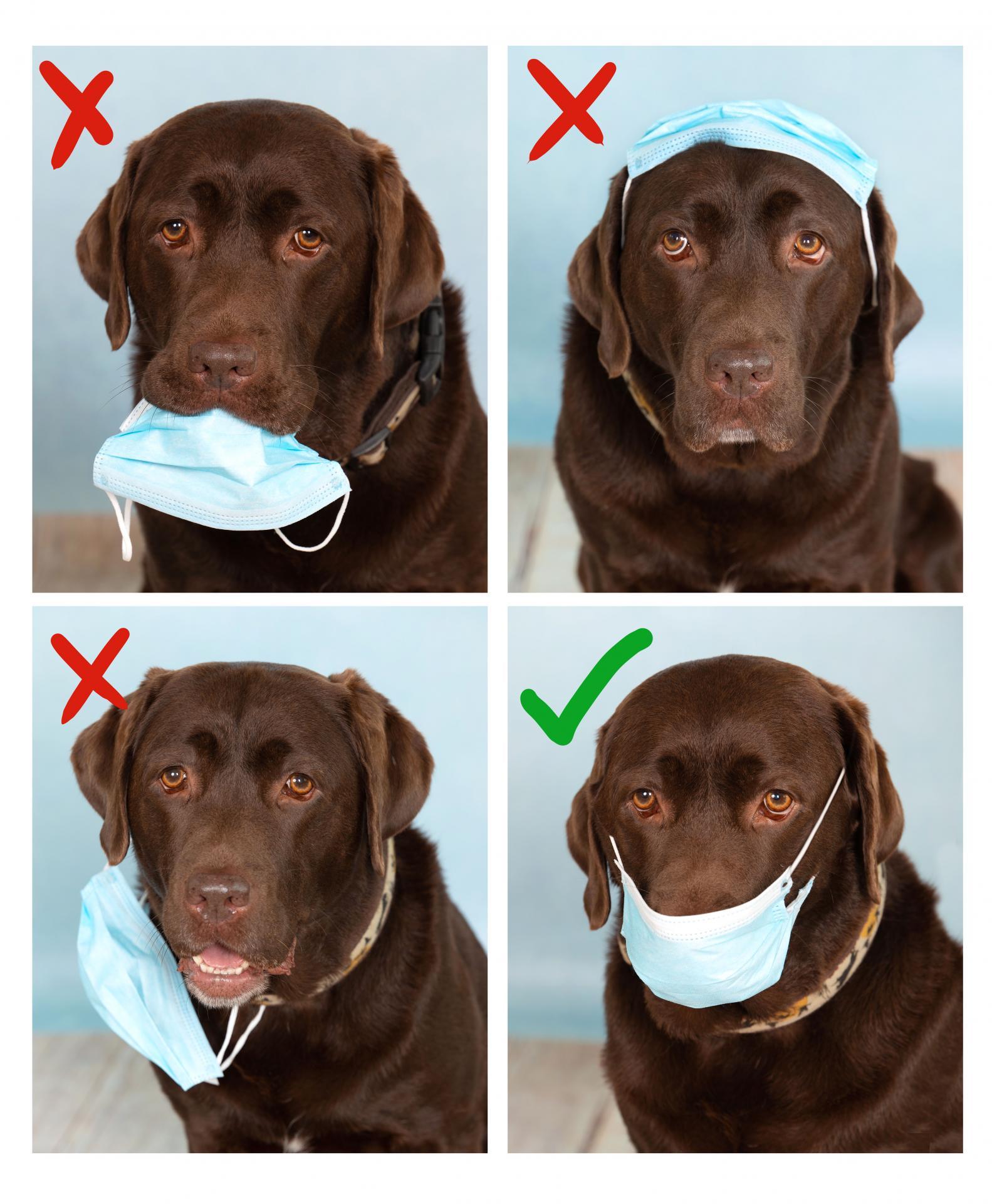 Schulhund Lilly mit Maske