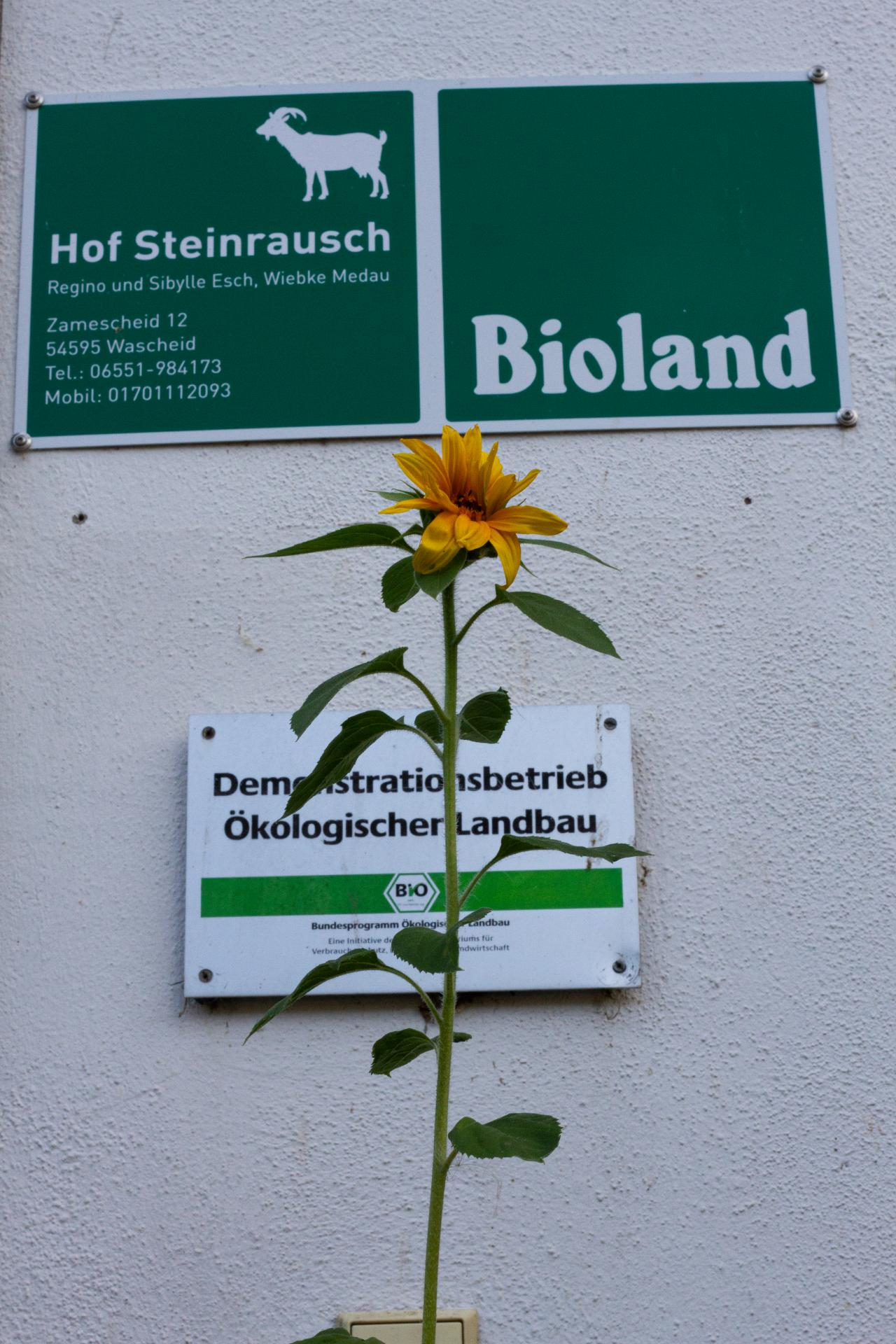 Hofschilder mit Blume
