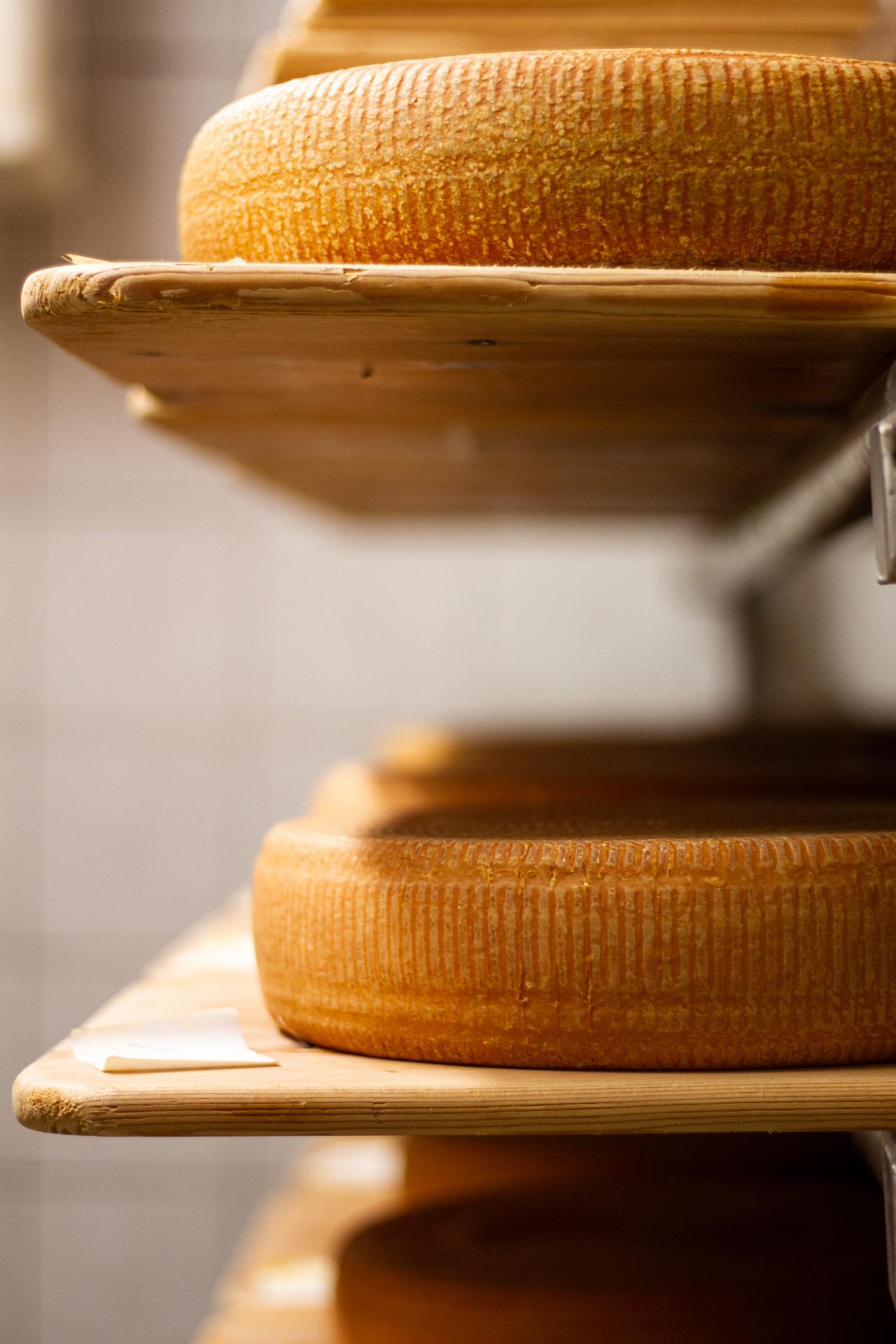 frische Käselaibe nach im Regal