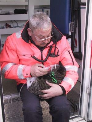 01.04.2004 Katze gerettet