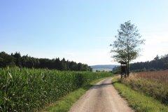 wanderweg fuggerholz