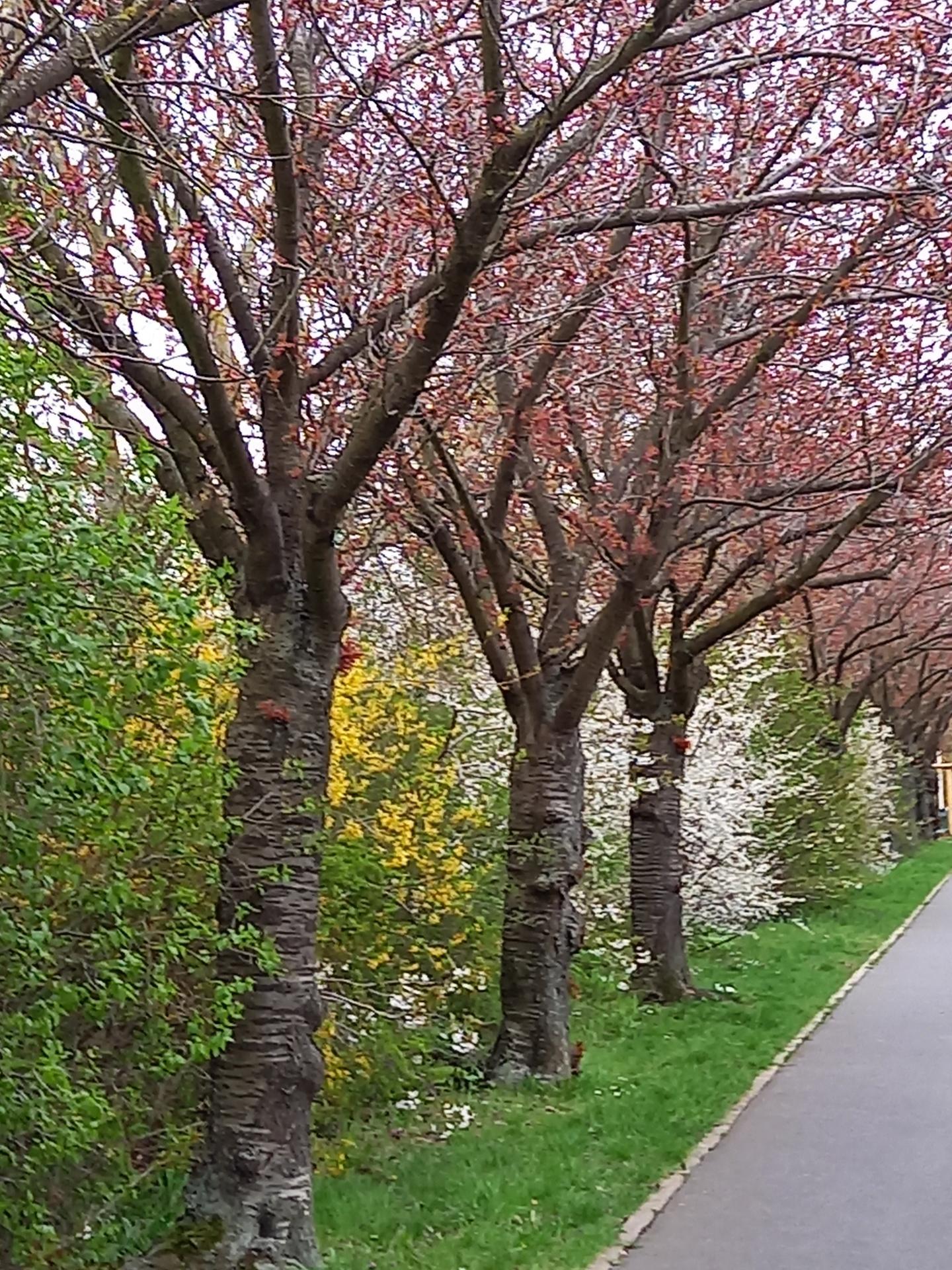 Frühling im Holzweg