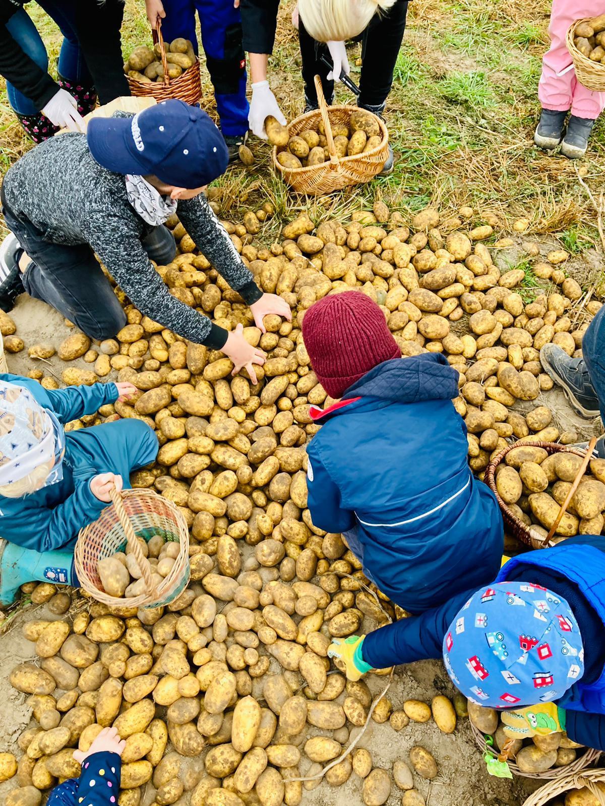 Kartoffel2