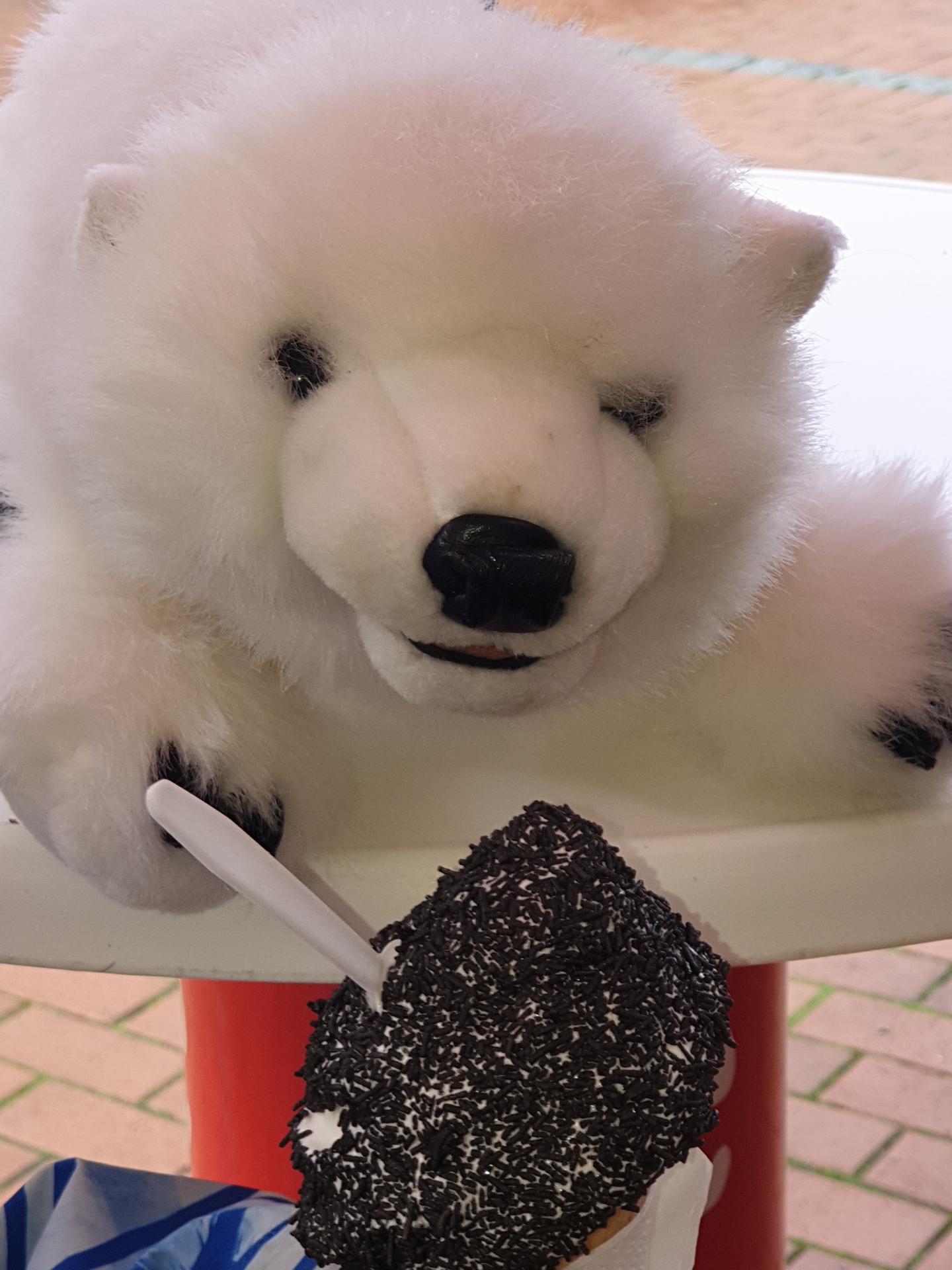 Eisbär Eis