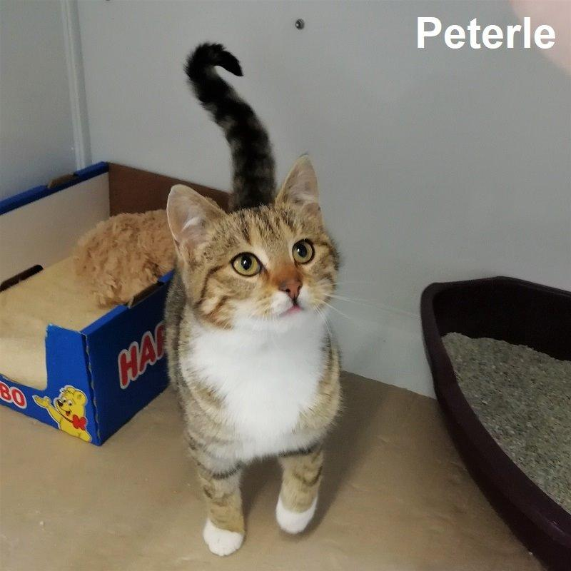 Peterle