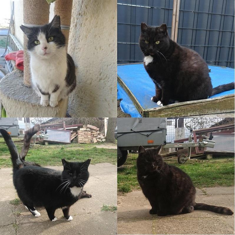 4 nette Hofkatzen