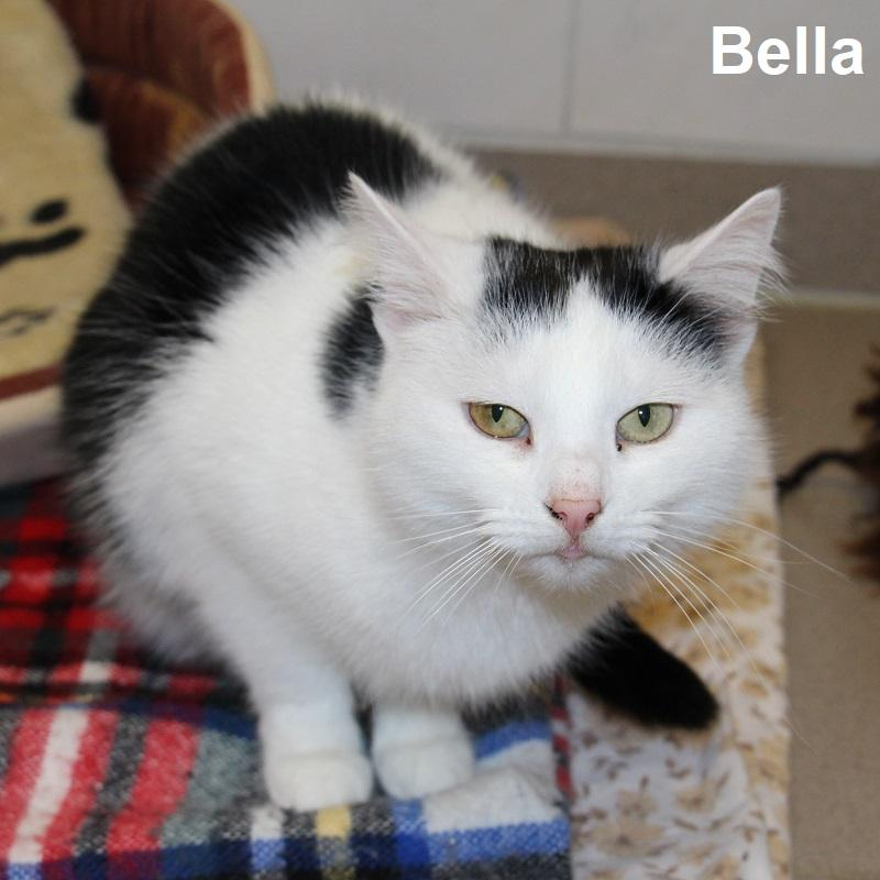 Bella 1