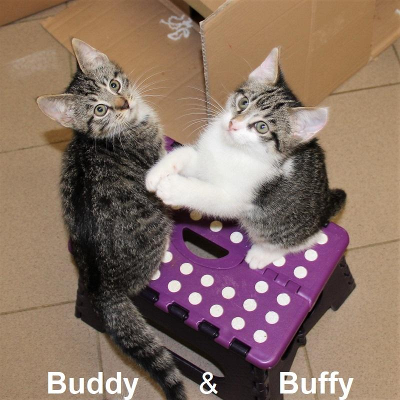 Buddy & Buffy