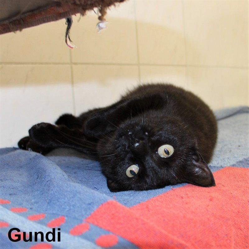 Gundi