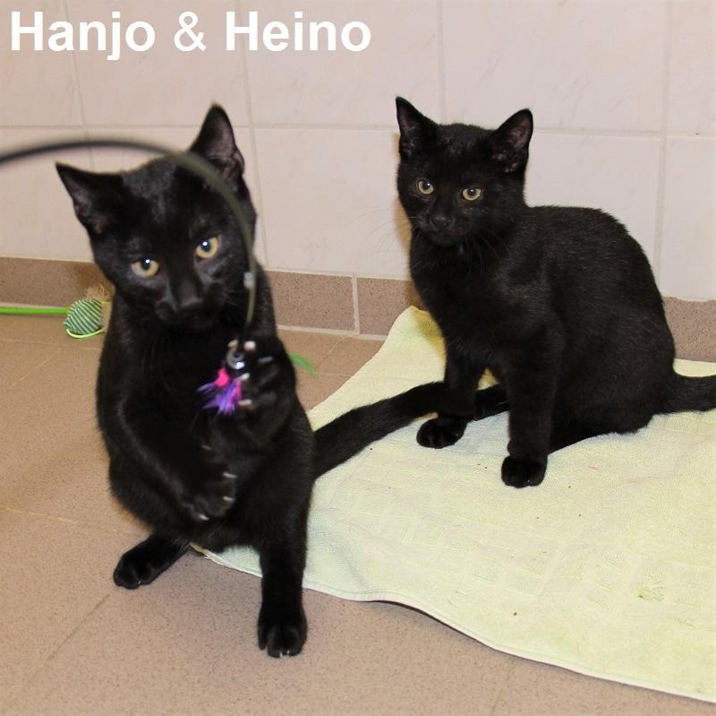 Heino & Hanjo