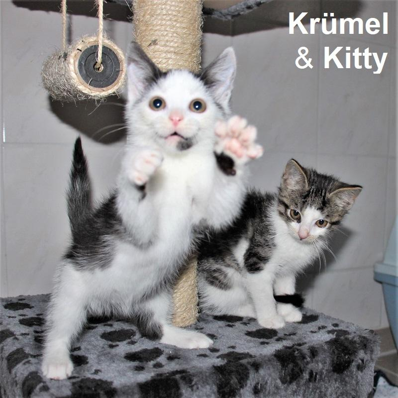 Krümel & Kitty