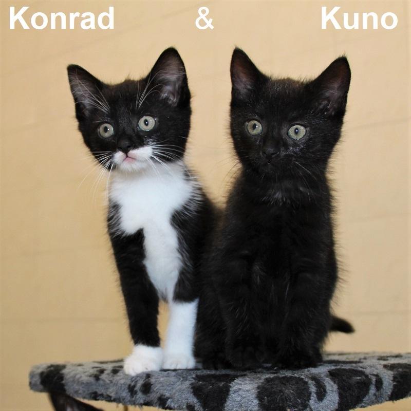 Konrad & Kuno