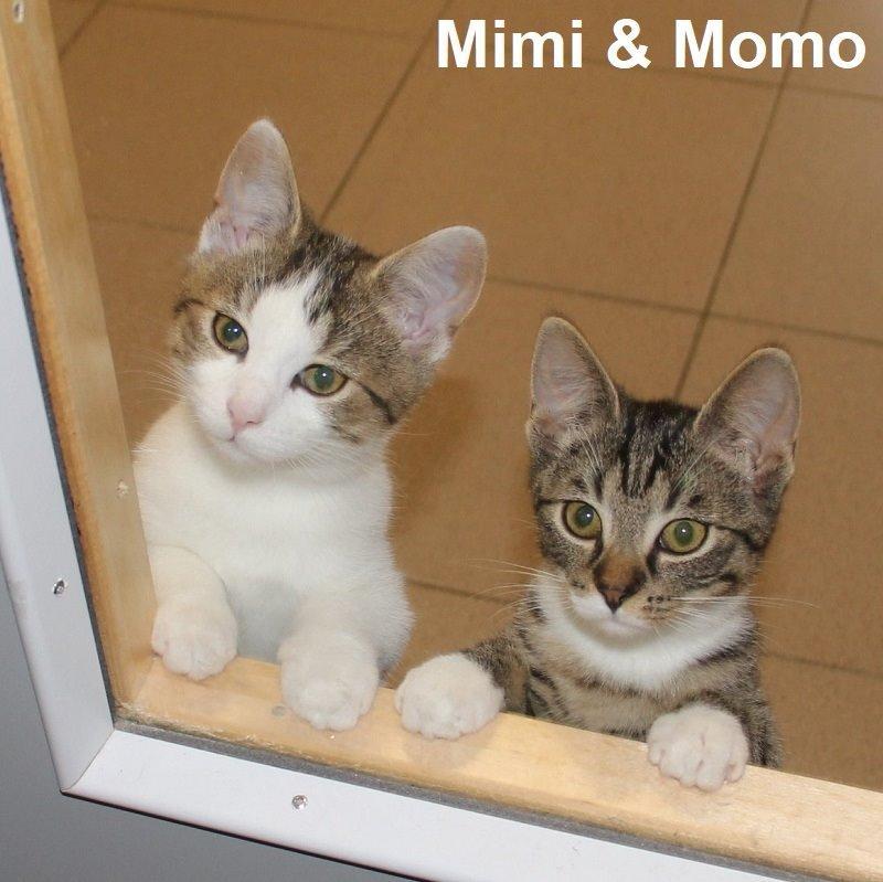 Mimi & Momo