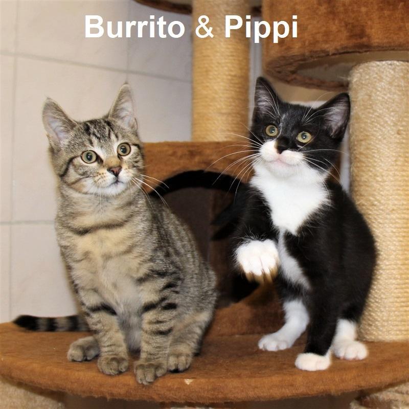 Buritto & Pippi