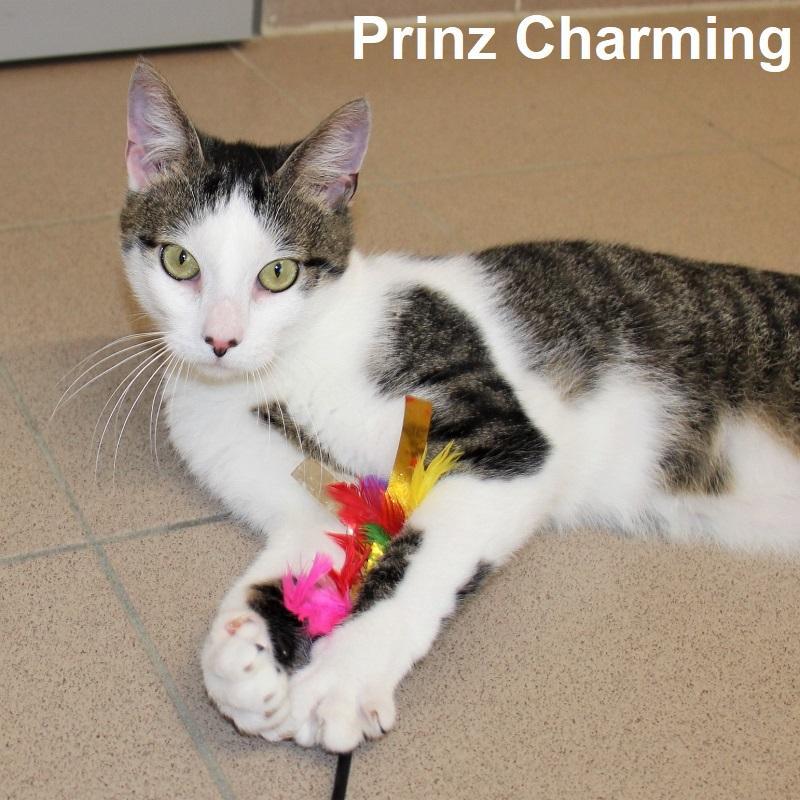 Prinz Scharming