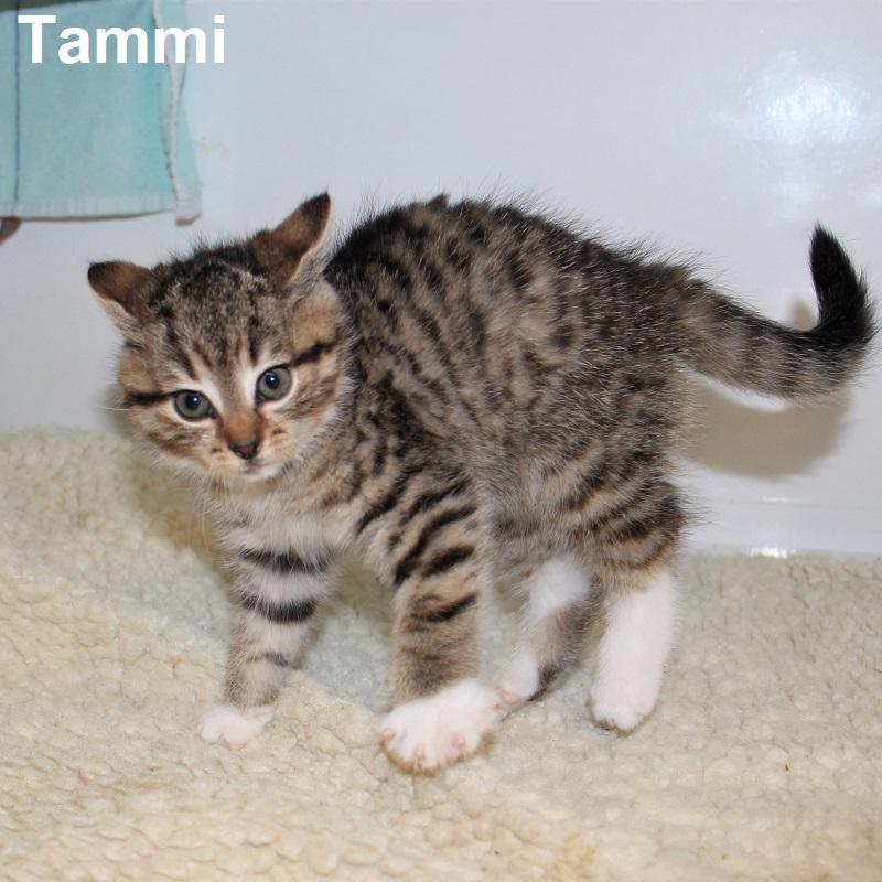 Tammi