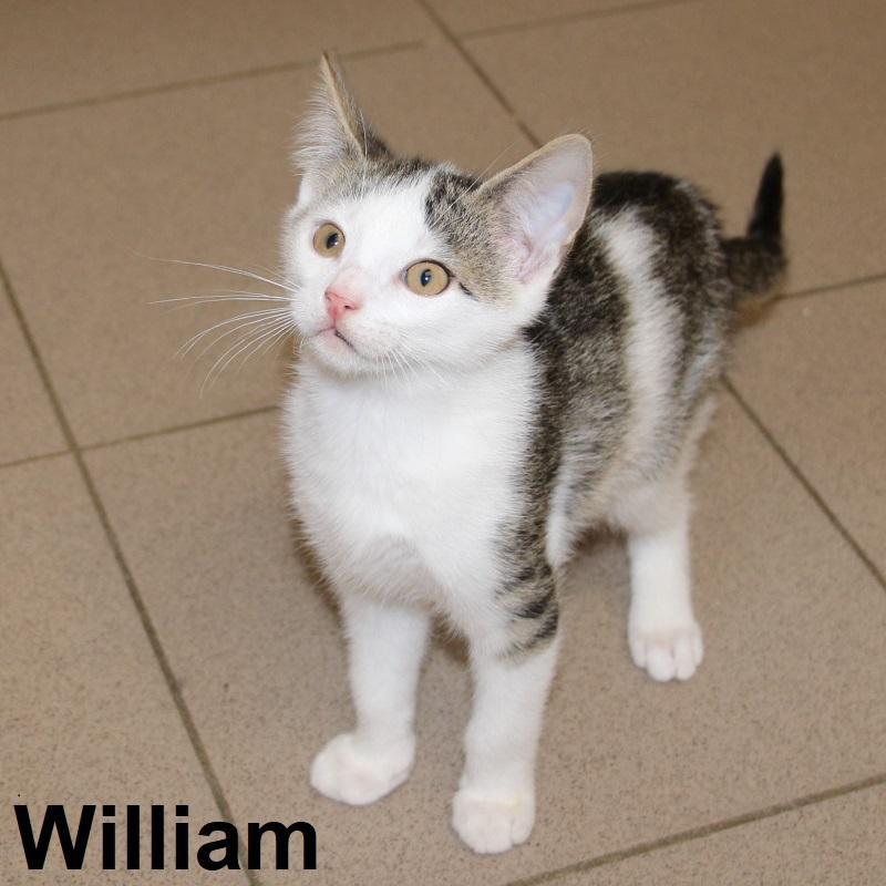 Wiliam